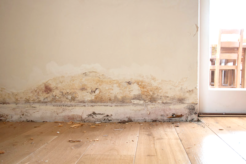 Building Defects Reports – Dampness and Condensation